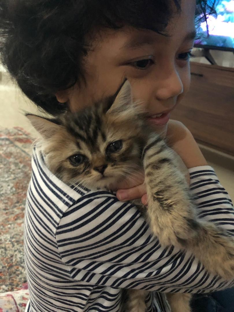 [VIDEO]Punyalah Menangis Teruk Masa Dukung Kucing, Ingatkan Sebab Apa Rupanya..