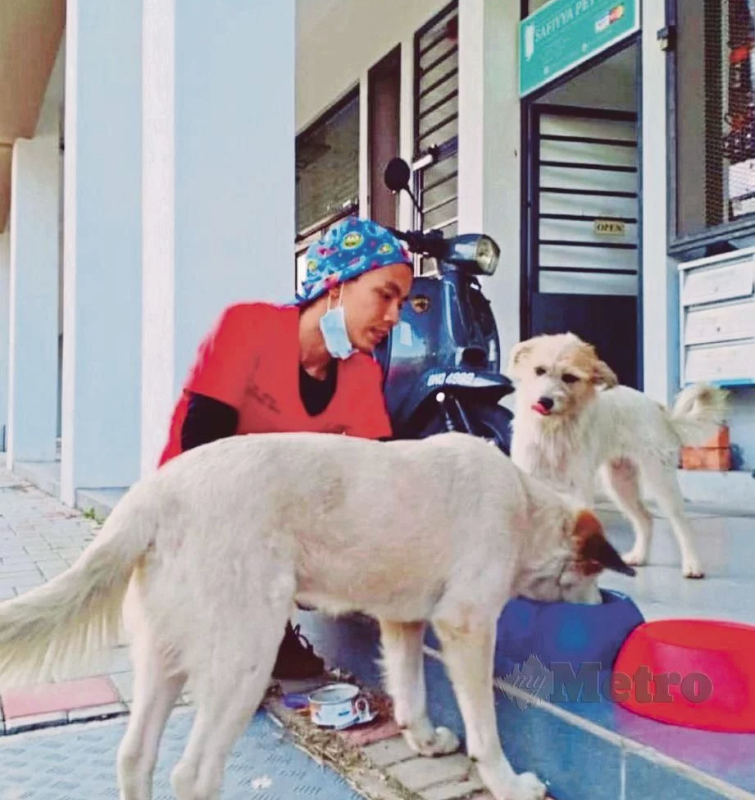 Selamatkan 200 Anjing Liar, Doktor Ini Akui Niatnya Selalu Dipandang Serong