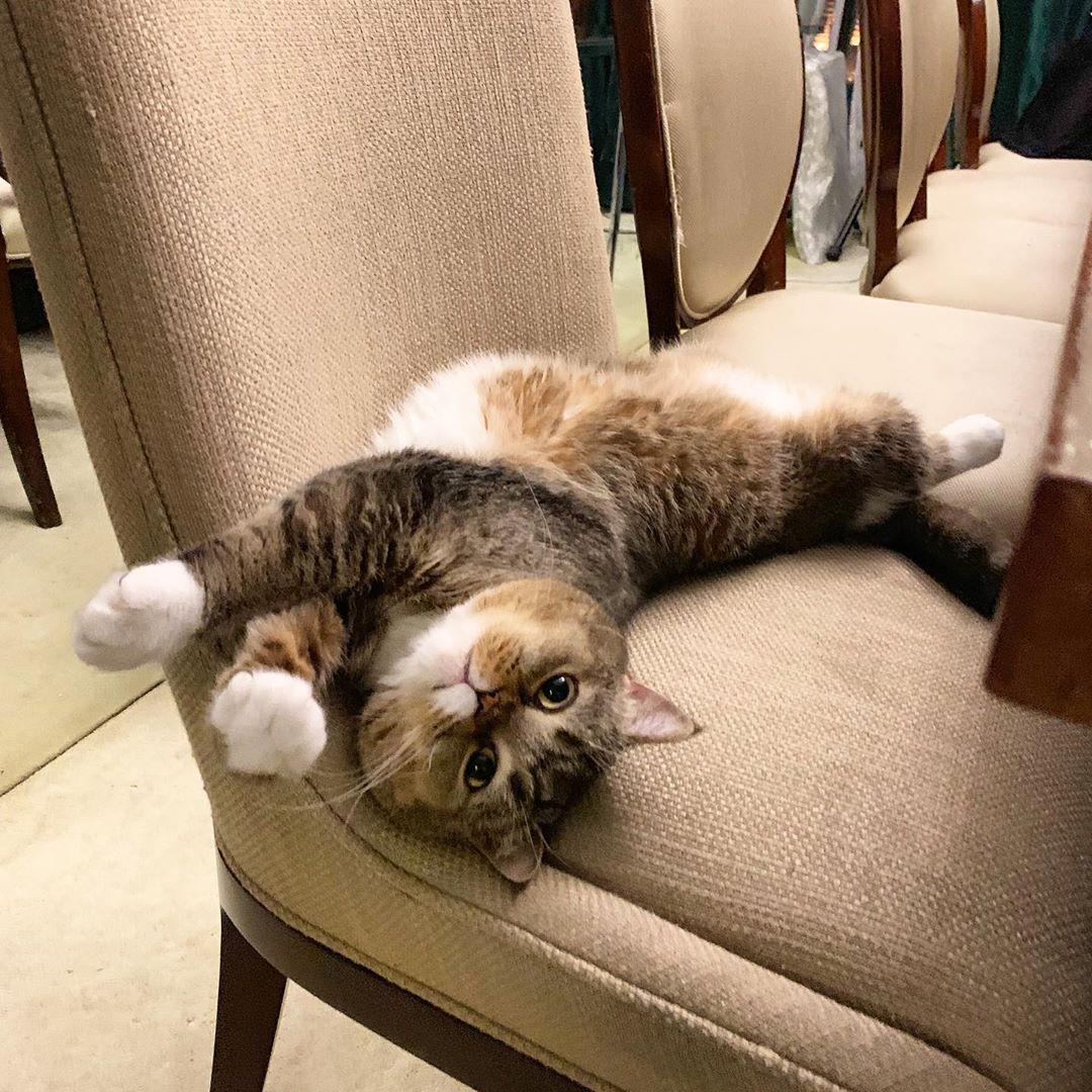 Ibu Hamil Kena Hati-Hati Bila Kemaskan Najis Kucing Sebab Boleh Kena Jangkitan!