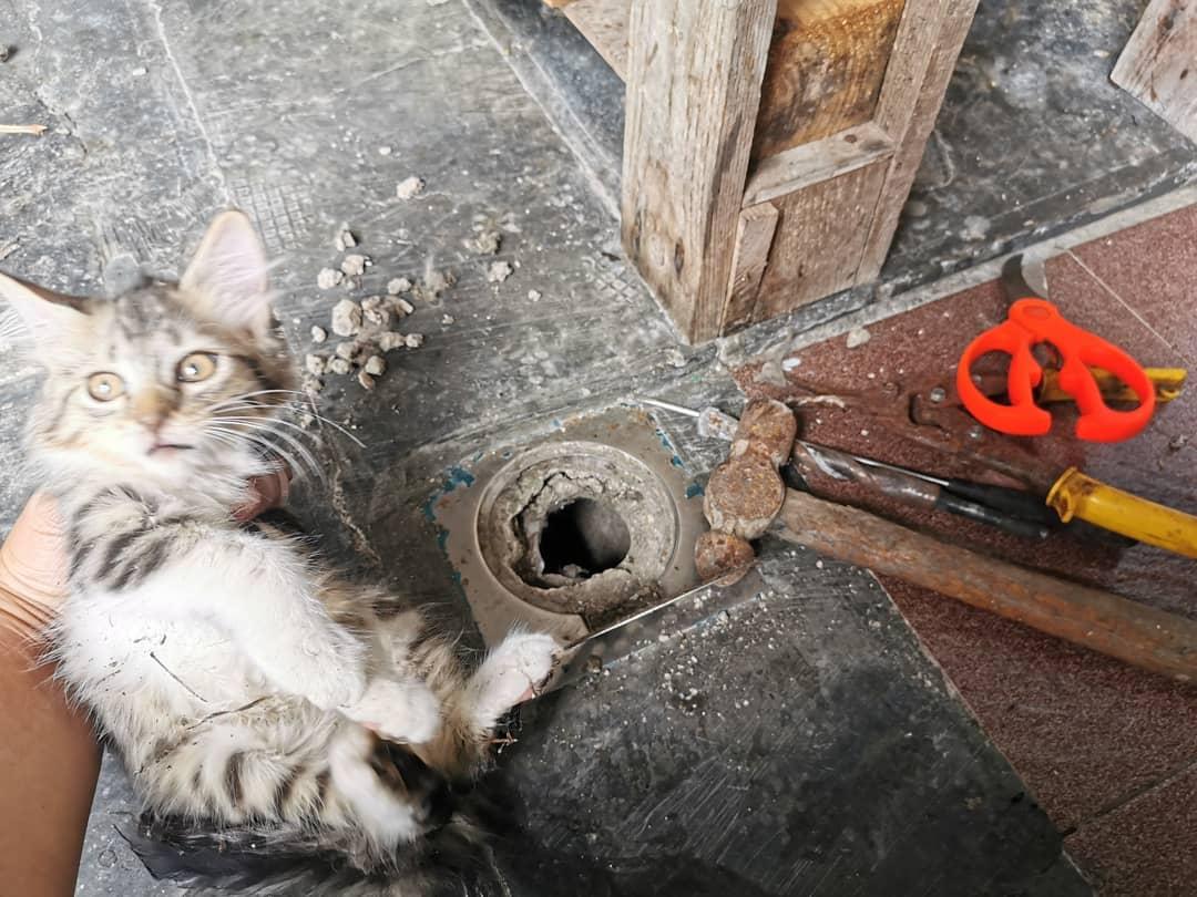 [VIDEO] Kepala Tersangkut Lubang, Lawak Habis Gelagat Kucing Ini Dibebel 'Omak'