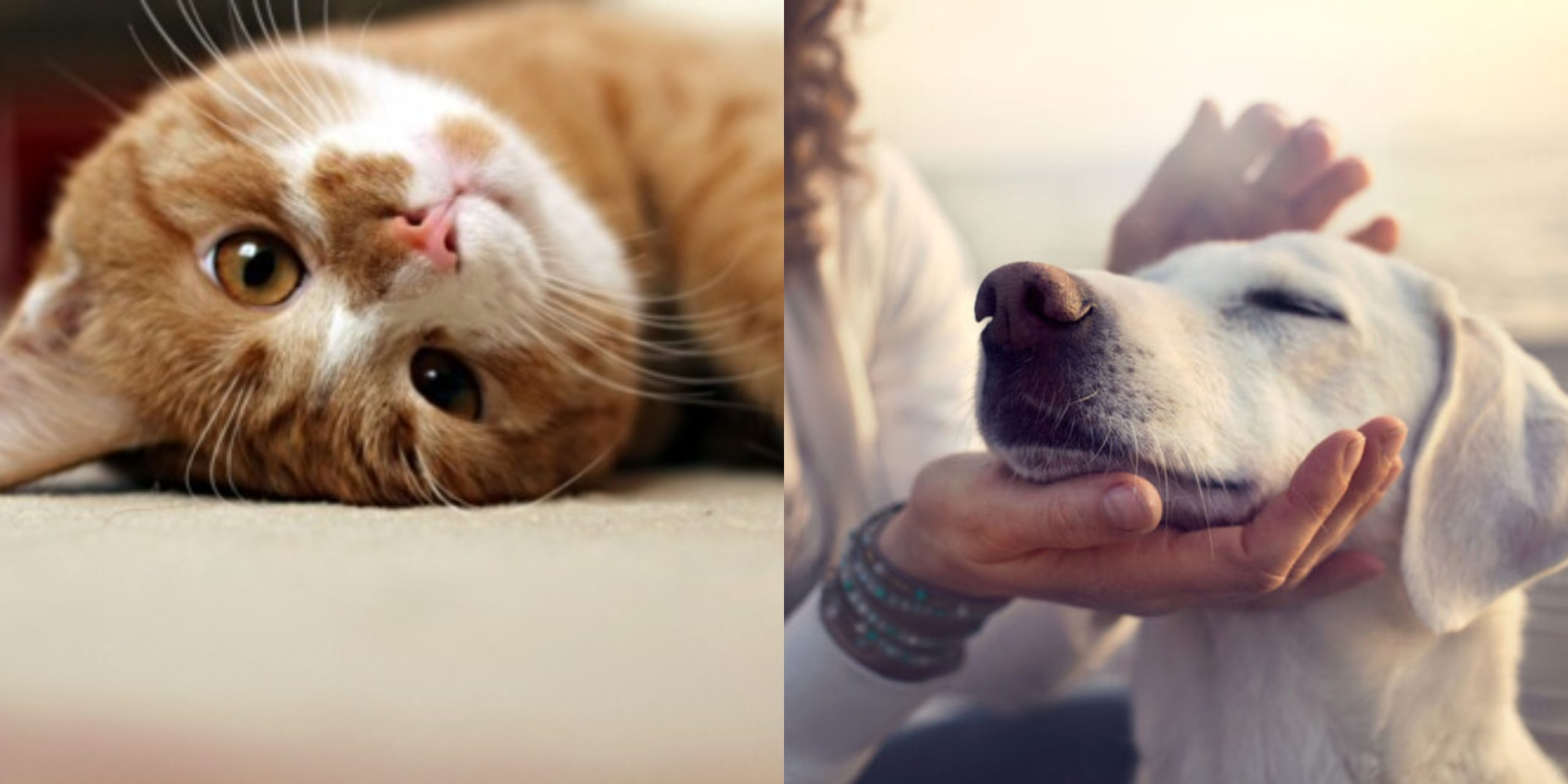 Awas Makanan Disumbat Paku, Sengaja Ditabur Aniaya Kucing & Anjing Kelaparan