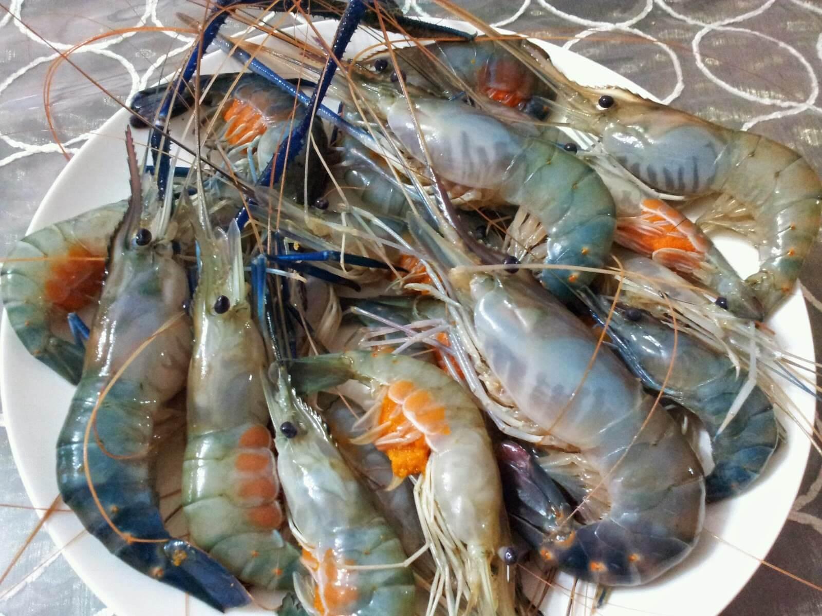 Temui Ajal Kerana Tergores Kulit Udang, Bakteria Makanan Laut Berisiko Tinggi
