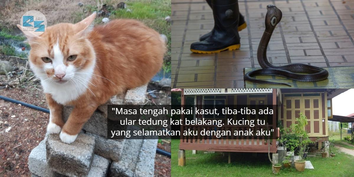 Pernah Bencikan Kucing, Lelaki Terus Insaf Bila 'Cik Meow' Gagah Melawan Ular