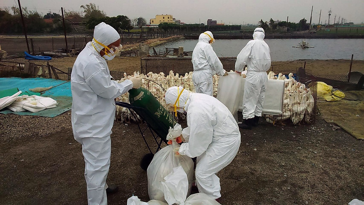 Tak Cukup Dengan Isu Coronavirus, Muncul Pula Wabak H5N1 Di Negara China
