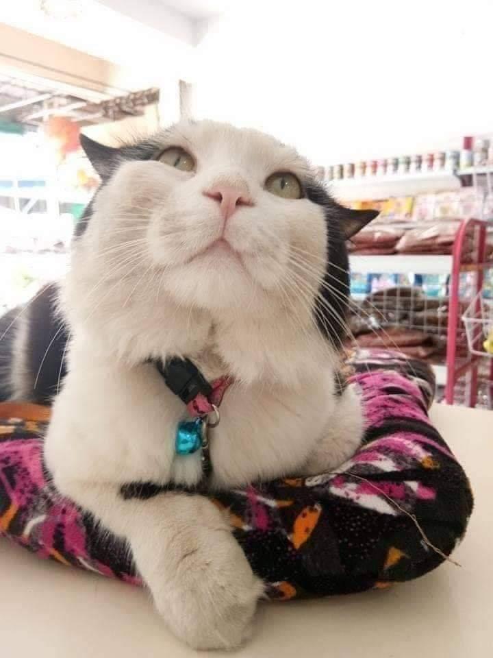 [FOTO] Menyamar Macam Kucing Comot Tepi Jalan, Padahal Bertuankan Orang Kaya