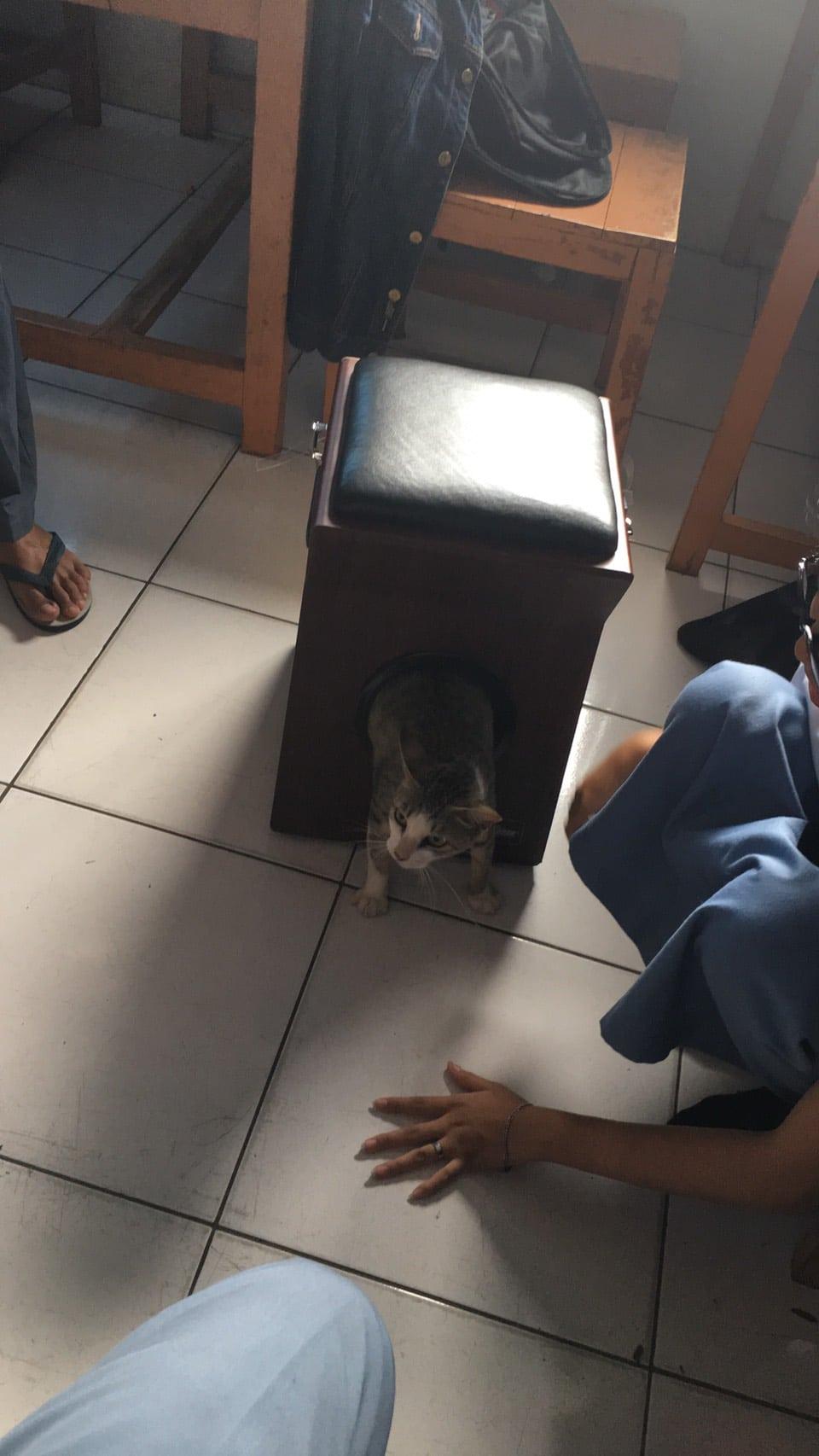 [VIDEO] Gabra Kucing Bunting Tersangkut Dalam Lubang, 1 Kelas Gigih Selamatkan