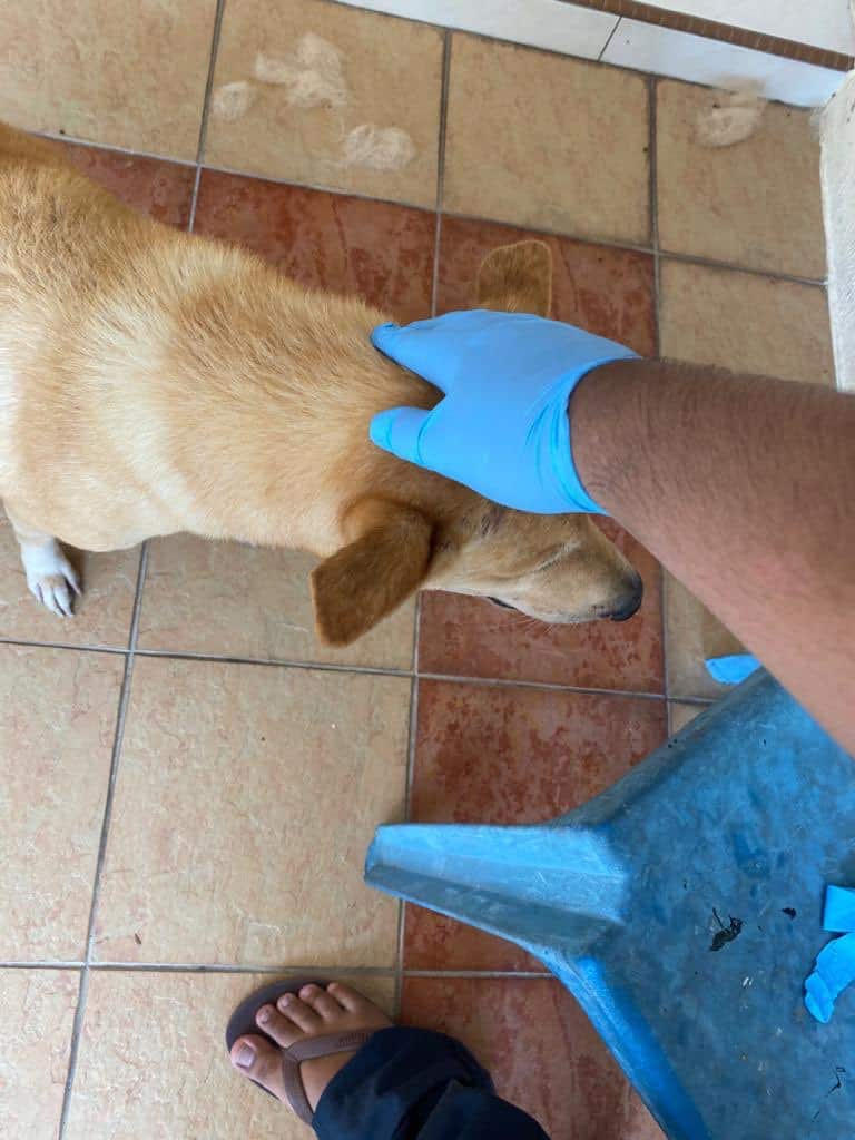 Anjing Buta Setia Tunggu Depan Pintu Lepas Kena Tinggal Dengan Tuan Rumah