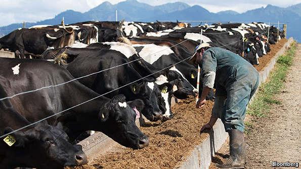 [VIDEO] Susu Terpaksa Dibuang Melimpah Ruah Ke Longkang Akibat Krisis COVID-19