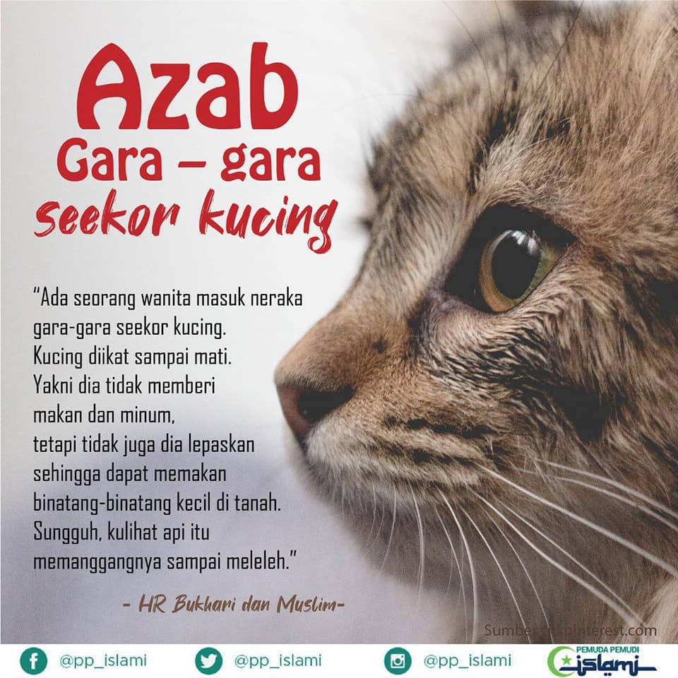 """Sungguh Hati Menangis Pilu, Payah Sangat Ke Terima Kucing?"" – Pencinta Haiwan"