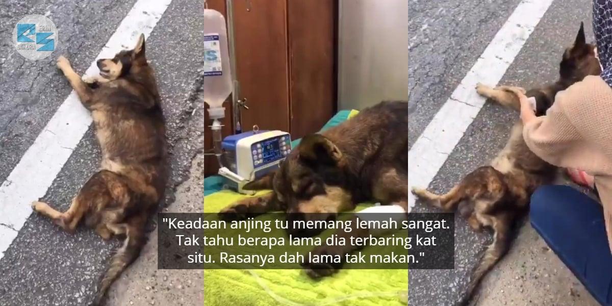 Lemah Sebab Tak Makan, Kebaikan Gadis Selamatkan Anjing Raih Pujian Ramai