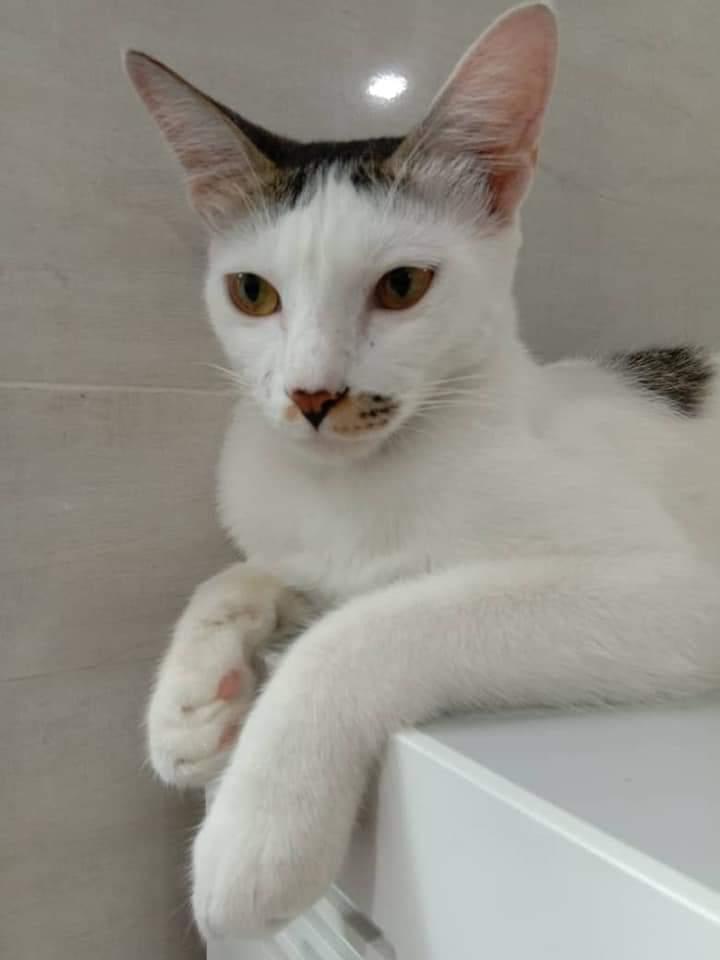 Dah 2 Hari Kucing Ajal,Pemilik Tahu Kisah Sebenar Bila Pelaku Mengaku Guna Nota
