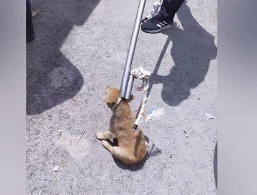 Warga Emas Ajal Tepi Jalan Kerana Masalah Jantung, Rupanya Dikejar Anjing Liar