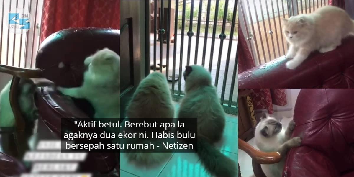 [VIDEO] Tuan Pening Tengok Sofa Berlubang, Jadi Gelanggang Tinju 'Si Bulus'..