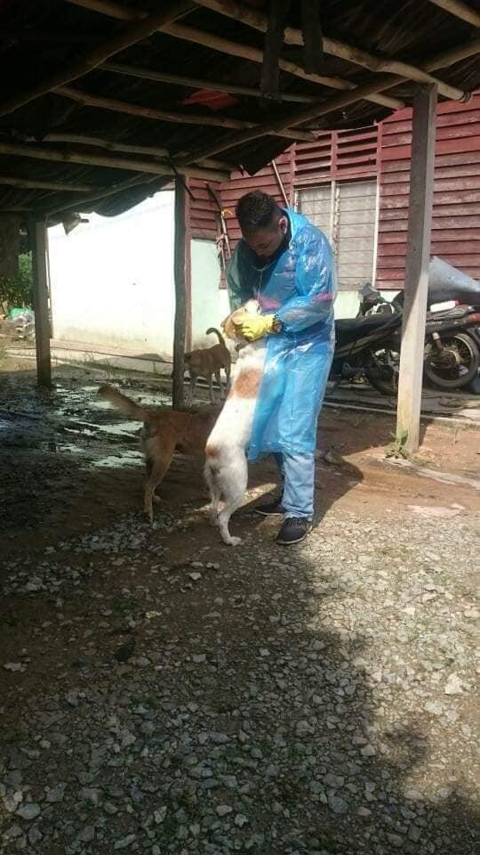 Ibu Anjing Terhutang Budi, Lelaki Sanggup Tanggung Kos Makan & Rawat 5 Anaknya