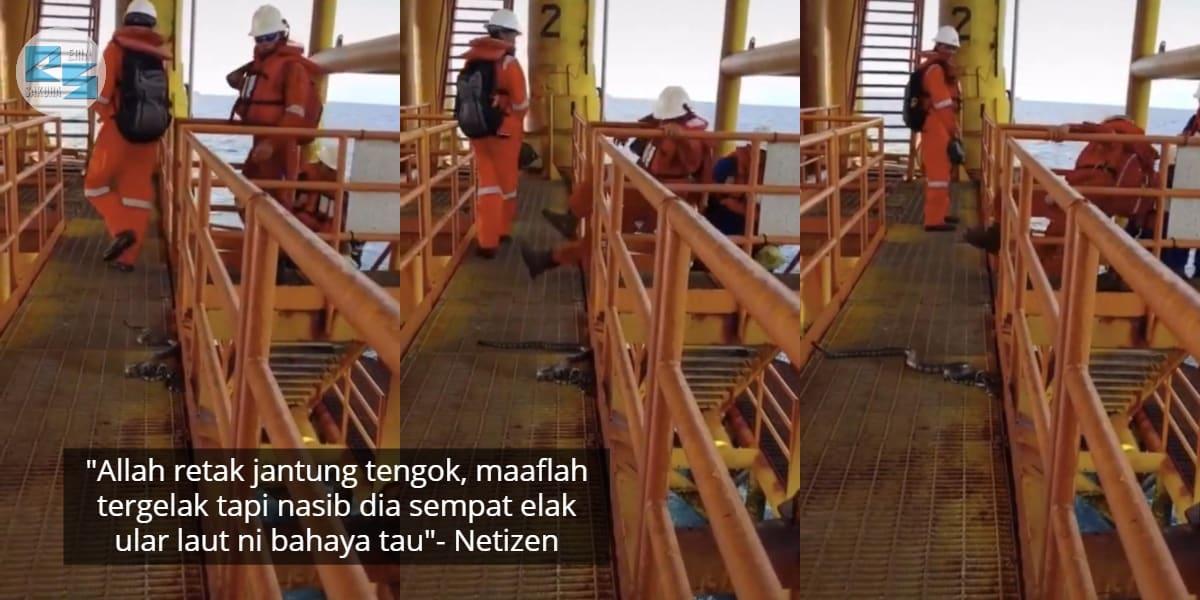 [VIDEO] Tak Perasan Ular Depan Mata, Pekerja Offshore Kalut Elak Ke Belakang
