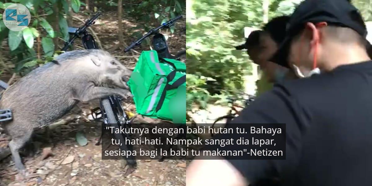 [VIDEO] Abang Rider Terkedu, Makanan Pelanggan Selamba 'Diterjah' Babi Hutan