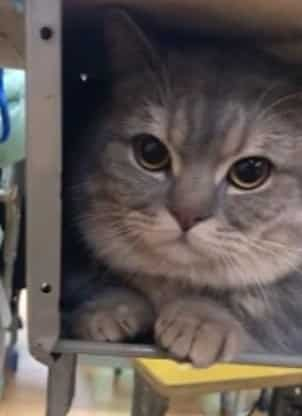 Gadis Terpaksa Bawa Kucing Ke Kelas, Duduk Diam Saja Bila Tersorok Bawah Meja