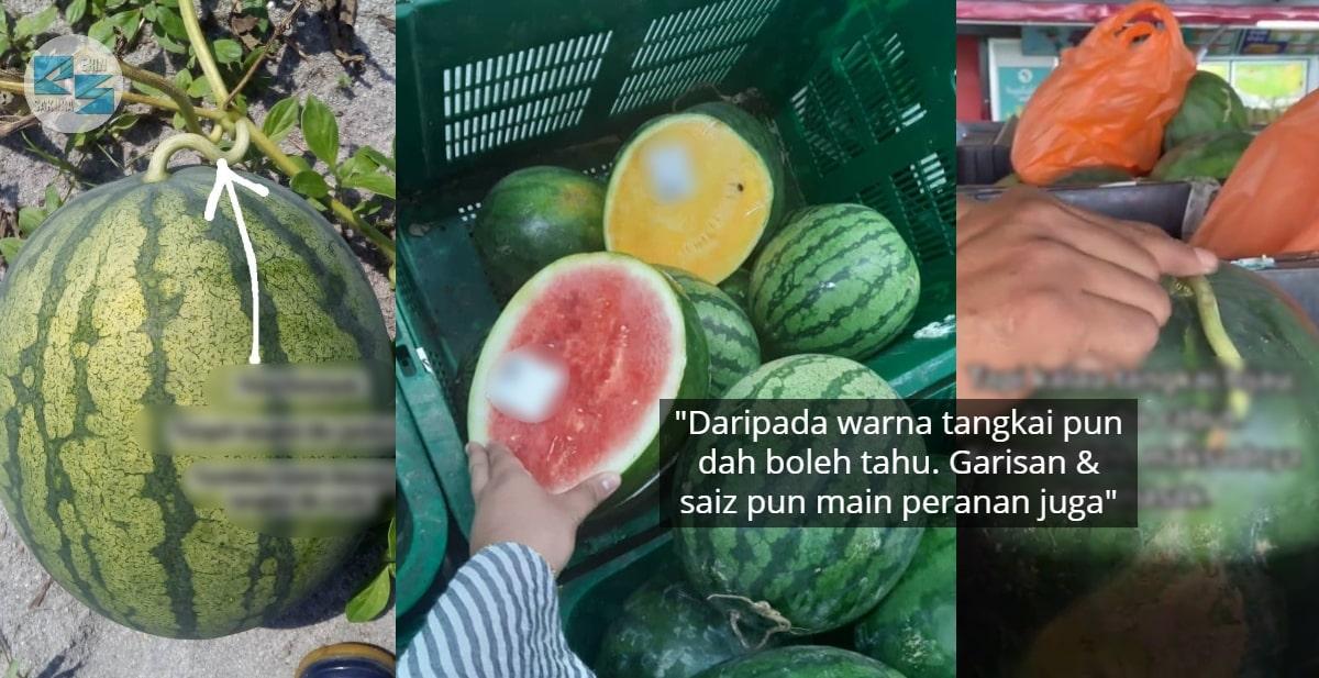 [VIDEO] Usah Ditipu Penjual Lagi, Rupanya Ini Tips Pilih Tembikai Confirm Masak