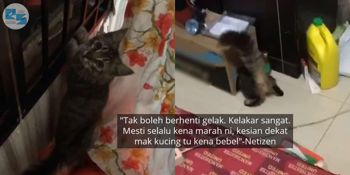 [VIDEO] Dibebel Rosakkan WiFi, Si Kucing Samsul Lintang Pukang Selamatkan Diri