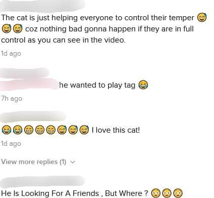 [VIDEO] Orang Lalu Lalang Semua Dicakar, Kenakalan Kucing Buat Ramai Terhibur