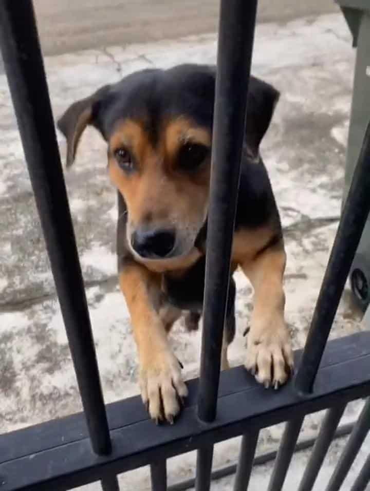 [VIDEO] Tunggu Makan Tiap Kali Balik Kerja, Anjing Jadi 'Bodyguard' Jaga Rumah