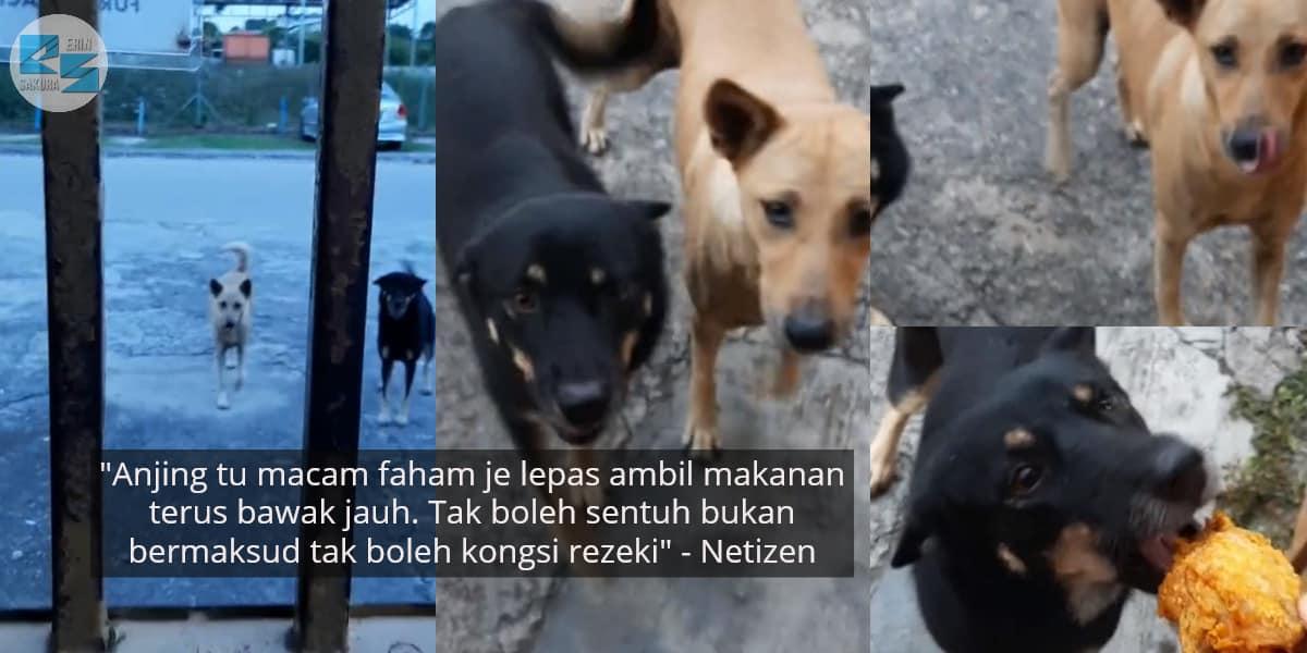 [VIDEO] Ekor Goyang Tanda Happy, Gadis Beri Seketul Ayam Untuk Setiap Anjing