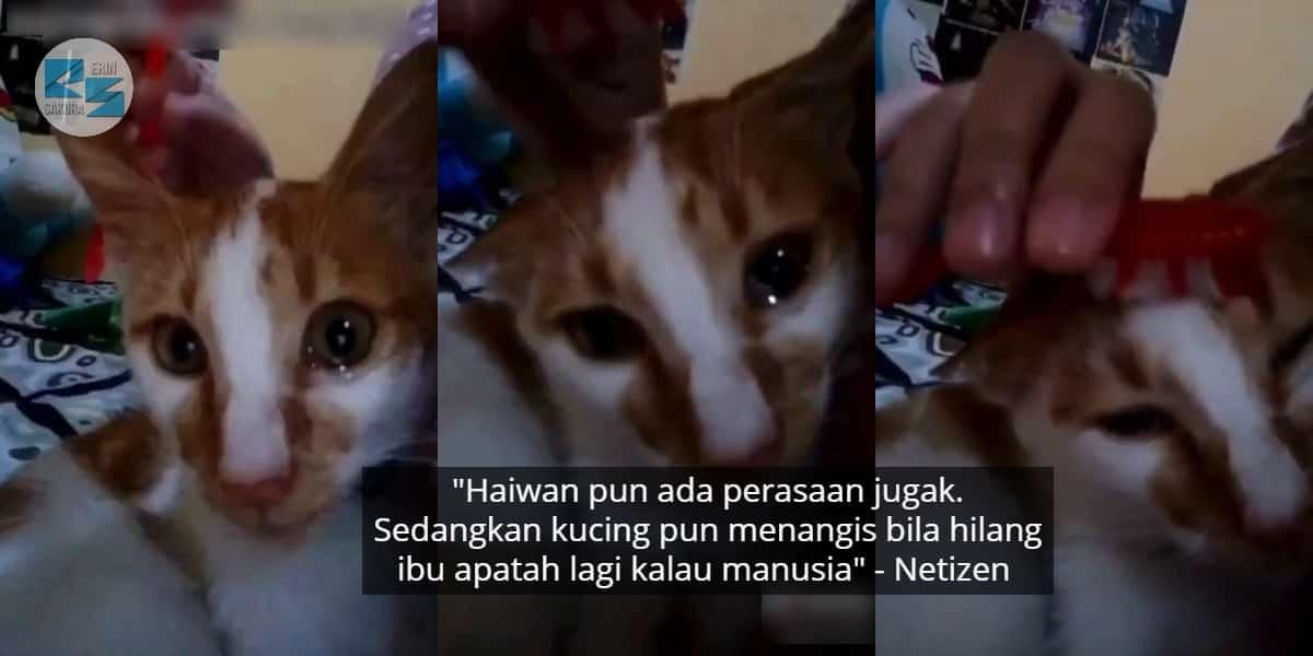 [VIDEO] Tuan Gosok Berus Gigi Di Kepala, Kucing Oyen Menangis Rindu Pada Ibu