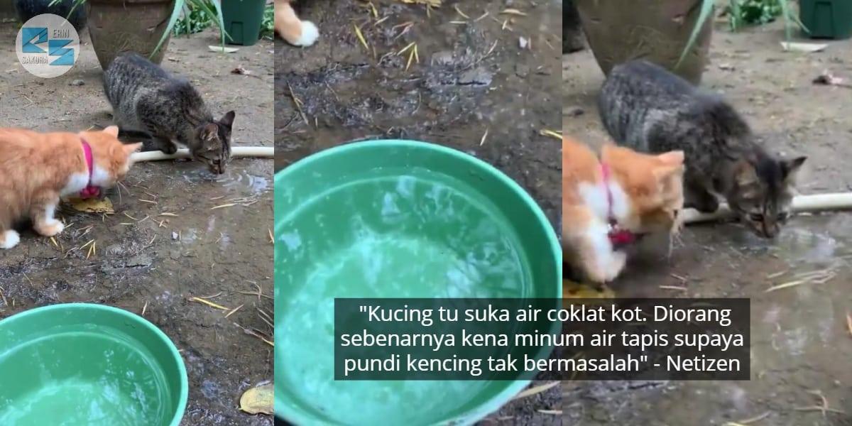 [VIDEO] Dah Bagi Bekas Air Bersih, Si Bulus Tetap Minum Dekat Lopak Air